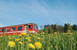 Appenzellerbahn fährt durch eine blühende Wiese